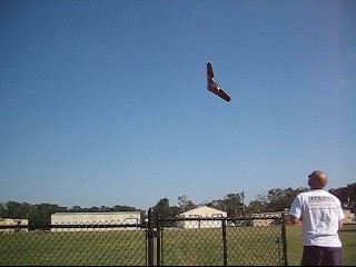 1_wing-1